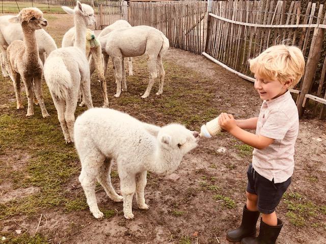 Alpaca kinderen